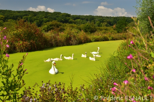 Espace Naturel Sensible du parc de Livry