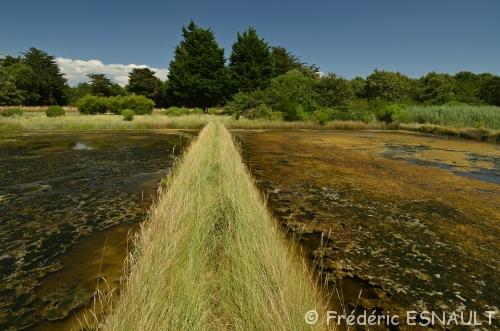 L'Espace Naturel Sensible du Marais de la Villeneuve