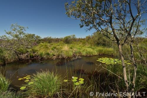 Réserve Naturelle National du Pinail