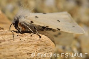 Papillon Cap Taillat Le Massif des Maures