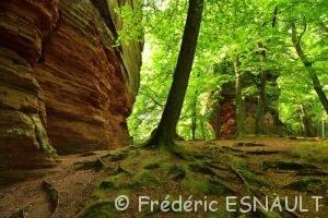 La falaise de grès des Vosges Altschlossfelsen