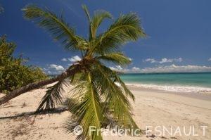 Plage de Grande Terre à Grand-Anse des Salines