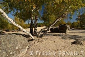 Forêt domaniale des Trois Pignons