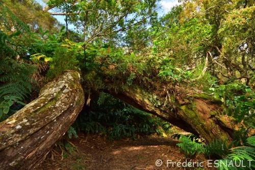 Espace Naturel Sensible du Piton de Mont-Vert